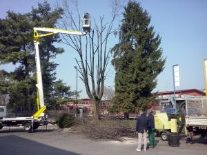 Servizi di pulizia - Potatura e realizzazione e manutenzione giardini